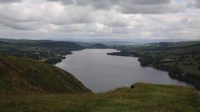 Черно-белые овцы и ветреный день с повышенным взглядом района Cumbria Англии Великобритании озера Ullswater акции видеоматериалы