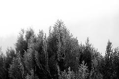 Черно-белые текстуры Стоковая Фотография