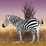 Черно-белый вектор зебры в кусте с заходом солнца на заднем плане иллюстрация штока