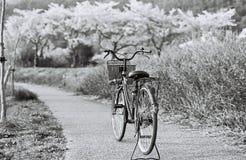 Черно-белый всадник Стоковые Фотографии RF