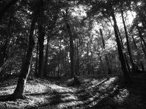 Черно-белый лес в Венгрии стоковое изображение