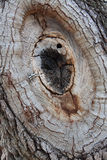 Черно-белый жук черепашки в Knothole Стоковые Фото