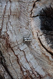 Черно-белый жук черепашки Стоковые Изображения RF