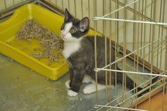 Черно-белый котенок в клетке на укрытии Стоковое Изображение