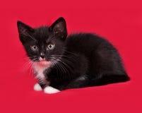 Черно-белый котенок лежит на красном цвете стоковая фотография rf