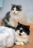 Черно-белый котенок 2 Стоковая Фотография