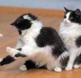 Черно-белый котенок 2 Стоковое фото RF