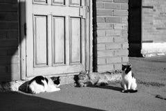 Черно-белый кот в черно-белом Стоковые Фото