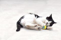 Черно-белый кот играя шарик Стоковое Изображение