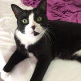 Черно-белый кот мальчика стоковая фотография