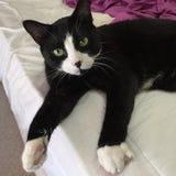 Черно-белый кот мальчика стоковые фотографии rf