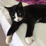 Черно-белый кот мальчика стоковое фото