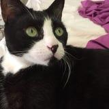 Черно-белый кот мальчика стоковое изображение rf