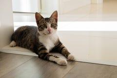 Черно-белый кот сидя на двери Стоковые Фотографии RF