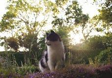 Черно-белый кот сидя на каменной стене Стоковые Фото