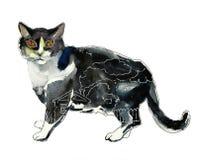 Черно-белый кот с аншлагом внутри концепции Стоковое Фото