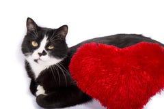 Картинка с котом и сердцем