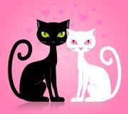 Черно-белый кот Стоковое Фото