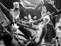 Черно-белый кот Стоковое фото RF