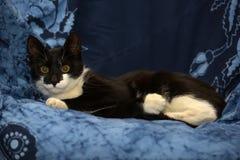 Черно-белый молодой кот Стоковые Фотографии RF