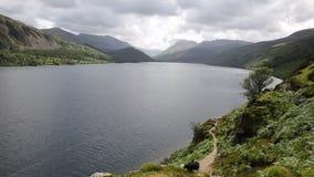 Черно-белый национальный парк Cumbria Англия Великобритания района озера вод Ennerdale собаки Коллиы сток-видео