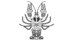 Черно-белый оживленный чертеж, племенной рак, Карцинома полезная как символ гороскопа, знак гастрономии, рак как символ malig иллюстрация вектора