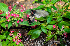 Черно-белый подавать бабочки Стоковое фото RF