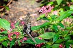 Черно-белый подавать бабочки Стоковое Фото