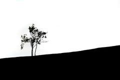 Черно-белый силуэт сиротливого дерева Стоковые Фото