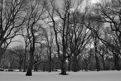 Черно-белый снежный Central Park Стоковое Изображение