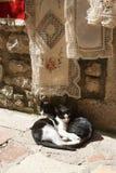 2 черно-белых кота на улице Стоковая Фотография