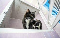 2 черно-белых кота Стоковые Изображения