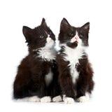 2 черно-белых котят Стоковые Фото