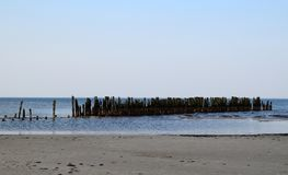 Черно-головая чайка на старых столбах волнореза Стоковые Фото