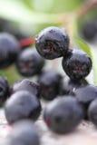 Черно-приношенная плоды зола горы Стоковое Изображение RF