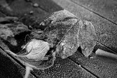 Черные белые морозные листья на красном деревянном столе Стоковая Фотография