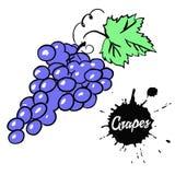 черные виноградины пука бесплатная иллюстрация