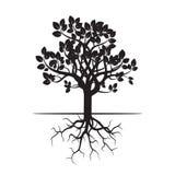 Черные дерево и корни Стоковые Фотографии RF