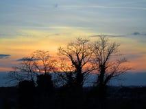 Черные деревья в огне Стоковое Изображение
