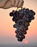 Черные израильские виноградины Стоковая Фотография