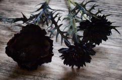 Черные искусственные цветки с горелкой ладана Стоковое Изображение RF