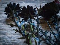Черные искусственные цветки с презирают Стоковые Фото