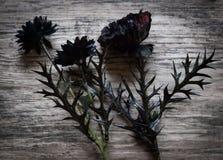Черные искусственные цветки Стоковые Изображения