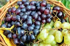 Черные и зеленые виноградины в корзине Стоковое фото RF