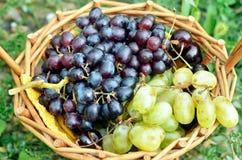 Черные и зеленые виноградины в корзине Стоковое Фото