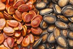 Черные и красные семена дыни на китайское Новый Год Стоковые Фотографии RF