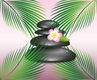 Черные камни дзэна спа и цветок frangipani plumeria иллюстрация штока