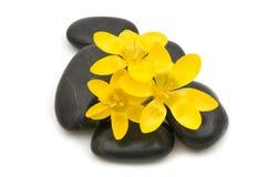 черные камни спы массажа стоковое фото rf