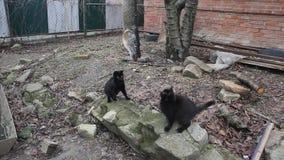 Черные коты и рыбы видеоматериал