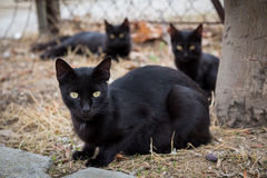 черные коты стоковые фотографии rf